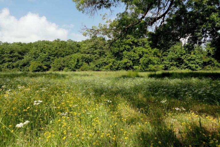 възстановяване на тревни площи, ЕК, Agrozona.bg