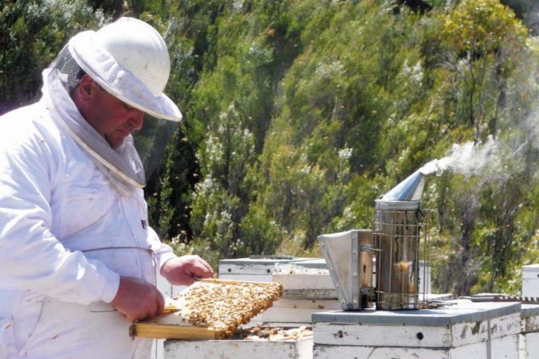 COVID-19, пчеларство, Agrozona.bg