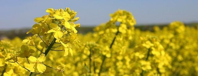 агрометеорологични усовия, есенни посеви, Agrozona.bg