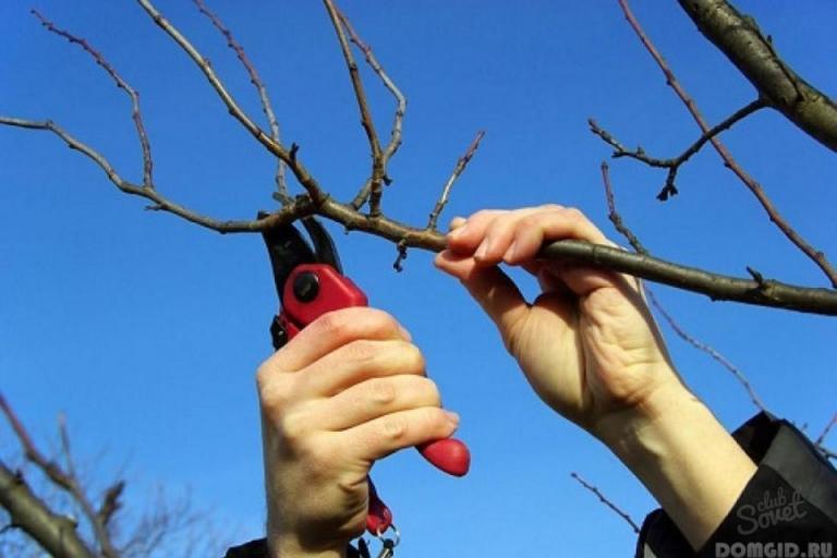 резитба овощни дървета, Agrozona.bg