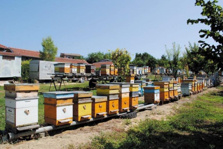 кошери, подвижно пчеларство, Agrozona.bg