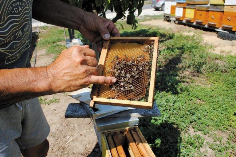 майки, Областен пчеларски съюз - Плевен, Agrozona.bg