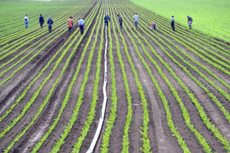 план, работници, Agrozona.bg