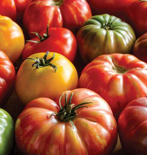 грижи, късни домати, Agrozona.bg