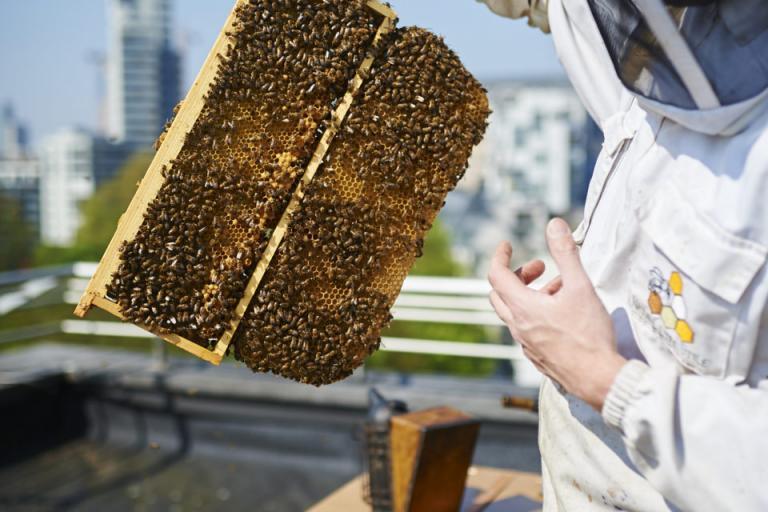 индустрия, мед, Agrozona.bg