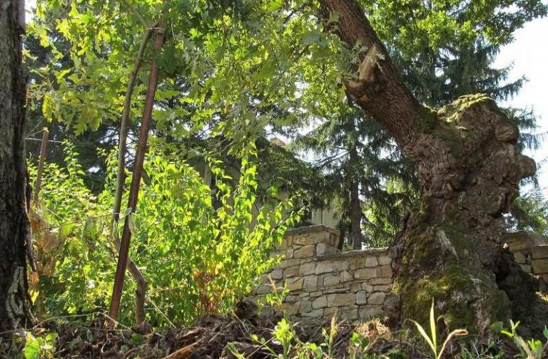дърво, награда, Agrozona.bg