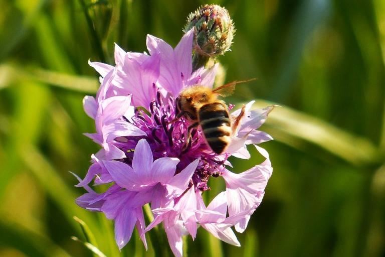ЕС, пчели, Agrozona.bg