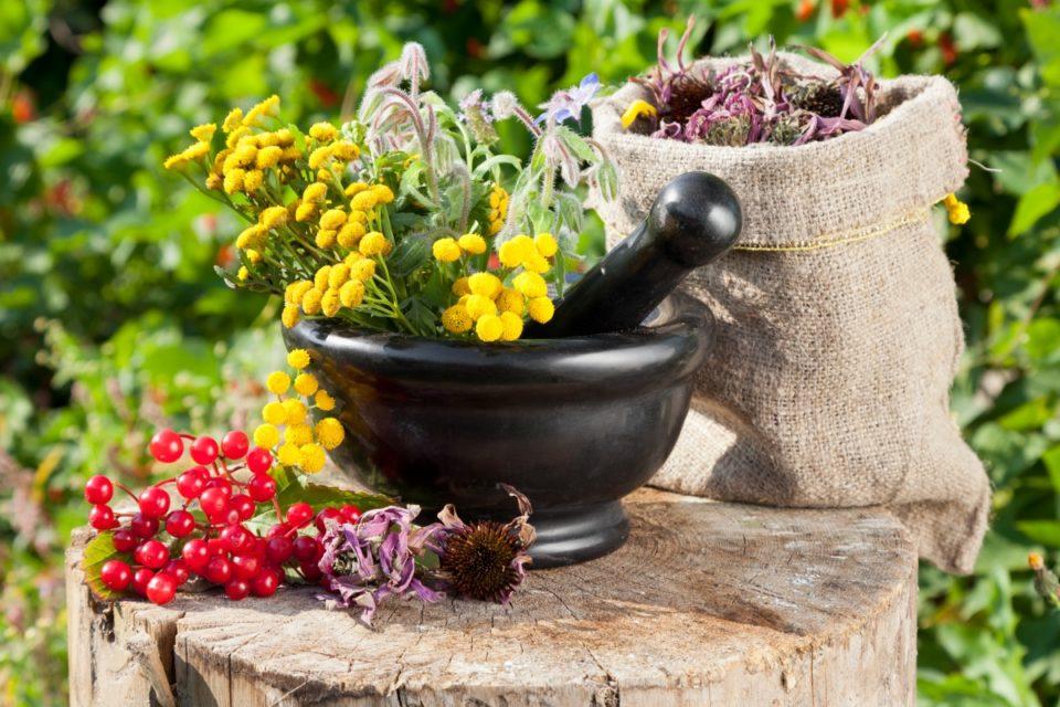 Разбийте опасните митове за билките