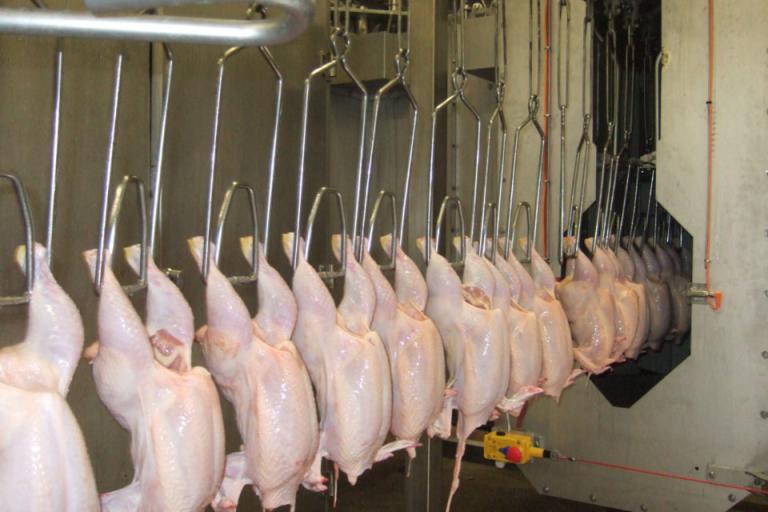 бяло месо, запаси, Agrozona.bg