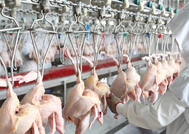 внос, птичи грип, Agrozona.bg