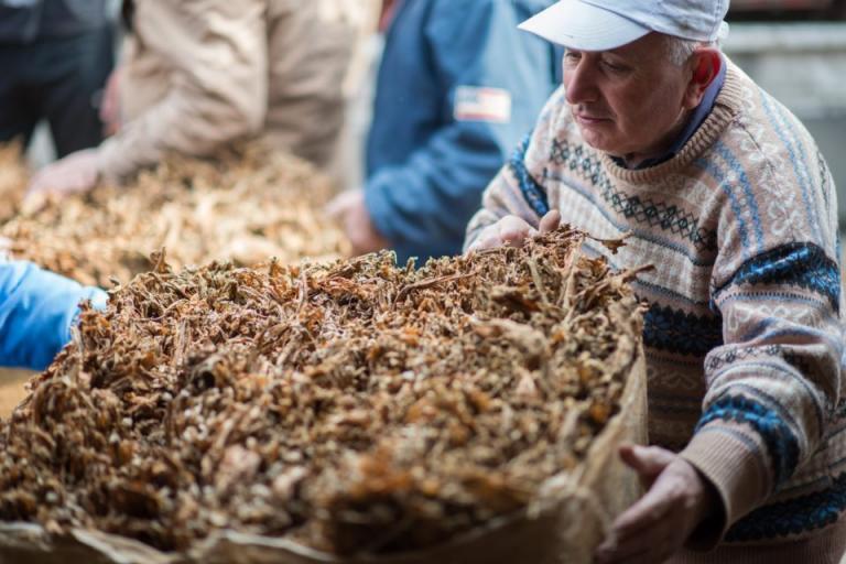 НАТ 2010, тютюн, Agrozona.bg