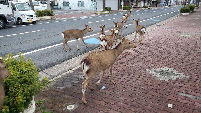 градове, диви животни, Agrozona.bg