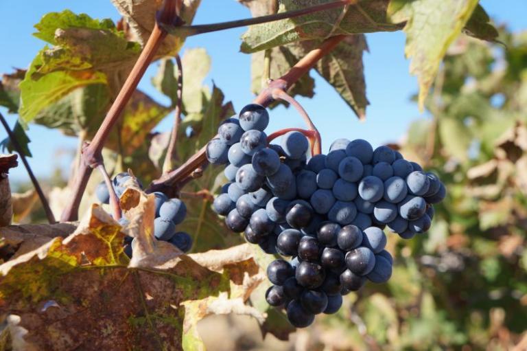 вино, Йордан Чорбаджийски, Agrozona.bg