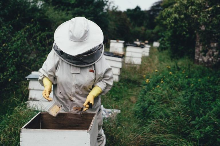 """""""Национална програма по пчеларство 2020-2022 г."""", прием, Agrozona.bg"""