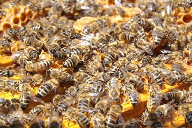 пчелари, пчели, Agrozona.bg