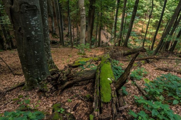 общински гори, Agrozona.bg
