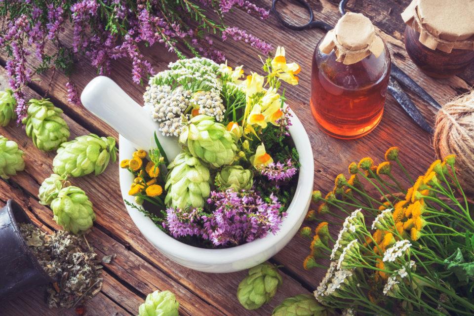 Билки вместо лекарства: 5 растения в подкрепа на здравето