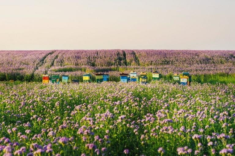 пчелари, система за пръскания, Agrozona.bg