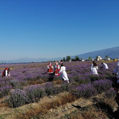 лавандула, празник, Agrozona.bg