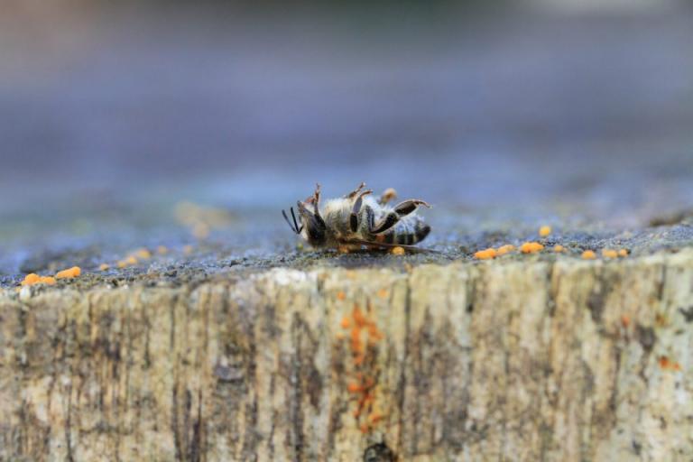 ЕК, пчеларство, Agrozona.bg