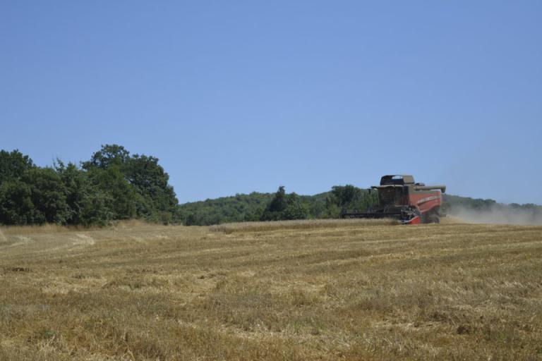 засушаване, пшеница, Agrozona.bg