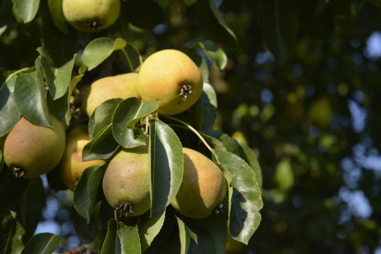 плодове, производство, Agrozona.bg