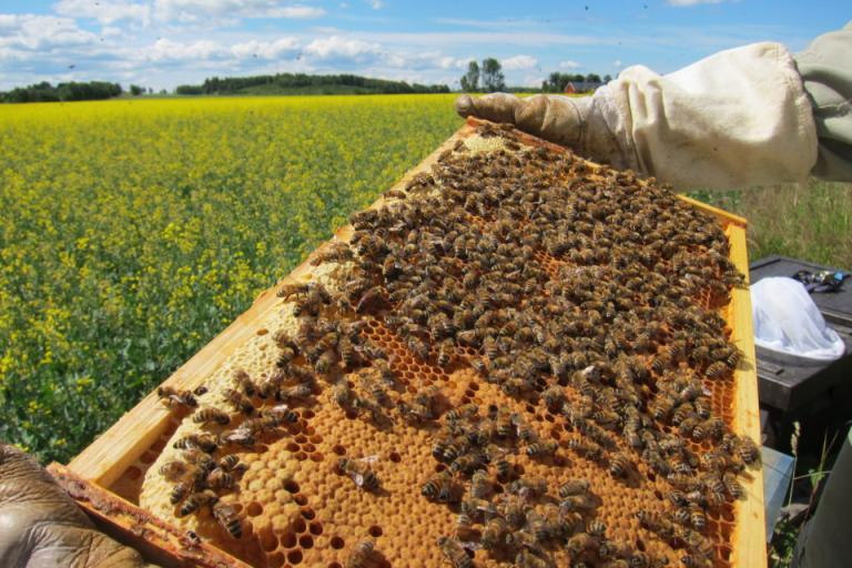 Закон за пчеларството, пчелари, Agrozona.bg