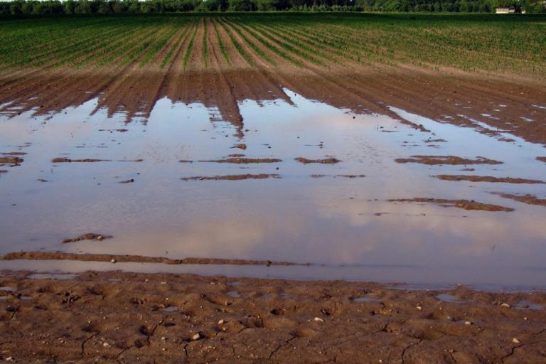вода, Димчево, Agrozona.bg