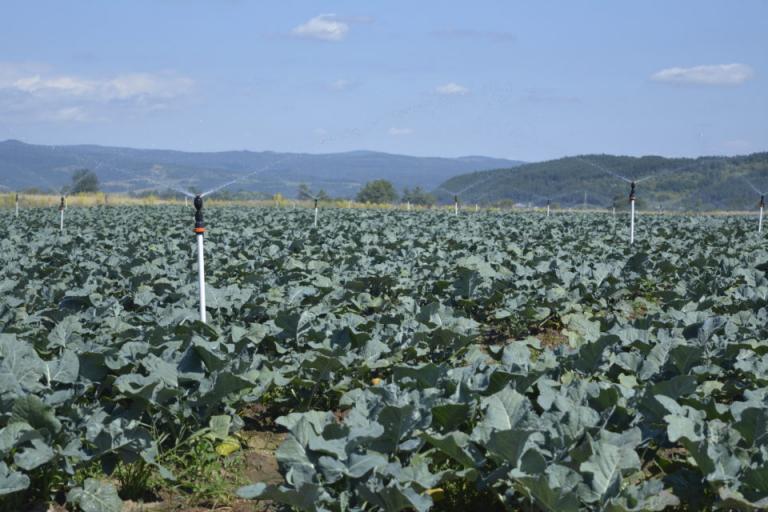 Консултативен съвет по овощарство и зеленчукопроизводство, Agrozona.bg