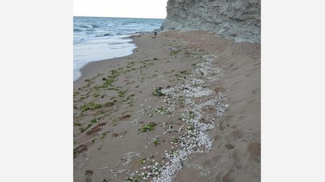 Ахтопол, море, Agrozona.bg