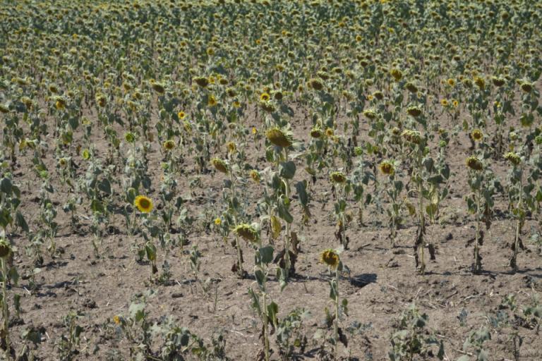 2 септември, земеделие, Agrozona.bg