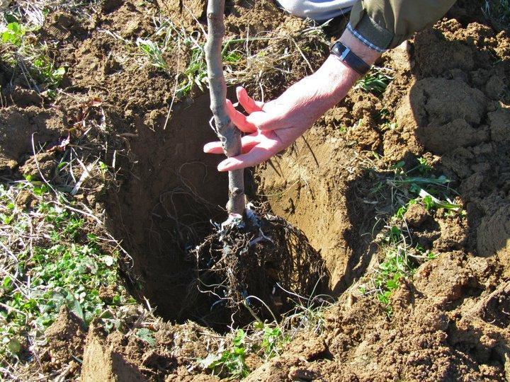 почва, Agrozona.bg