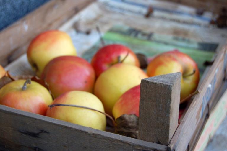 съхранение, ябълки, Agrozona.bg
