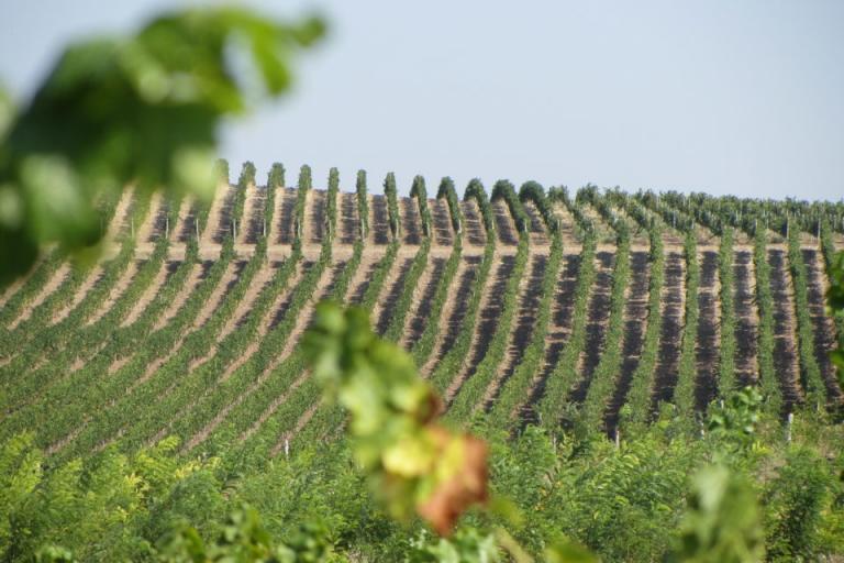 Закон за виното и спиртните напитки, засаждане, Agrozona.bg
