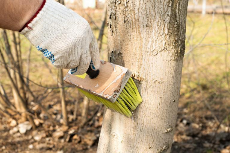 белосване, дървета, Agrozona.bg