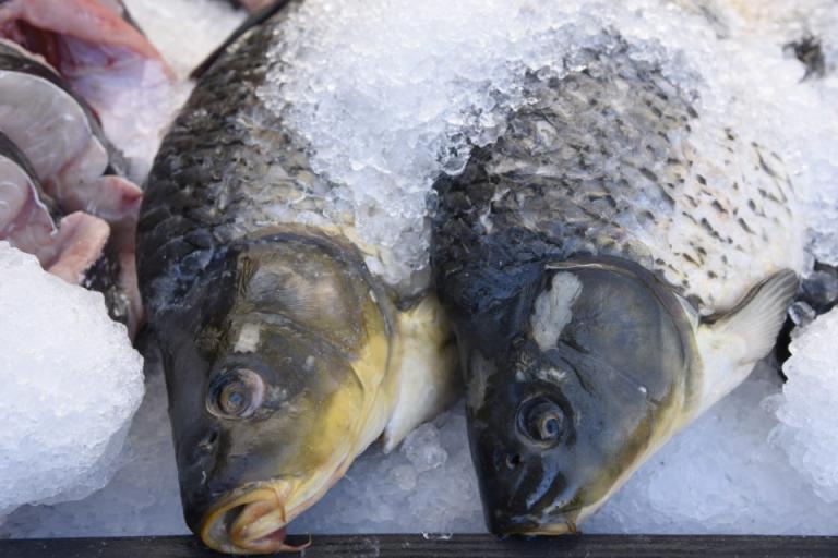 БАБХ, риба, Agrozona.bg