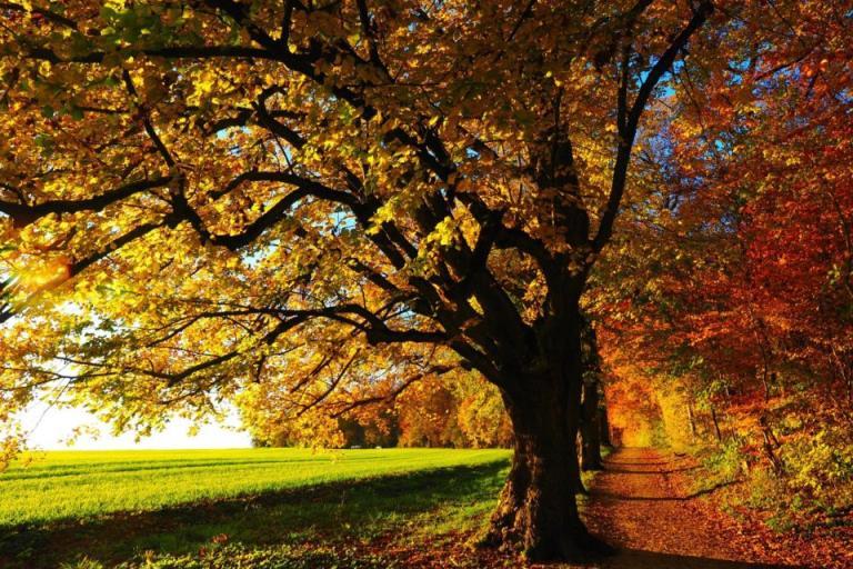 дърво, ЕС, Agrozona.bg