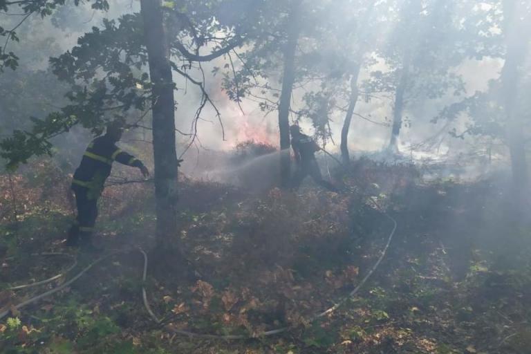 горски пожари, ИАГ, Agrozona.bg
