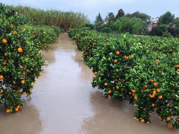 дъжд, загуби, Agrozona.bg