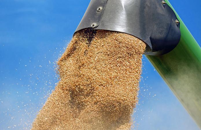 зърно, пшеница, Agrozona.bg