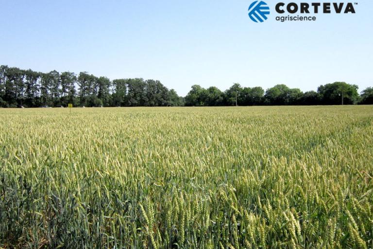 житни култури, растителна защита, Agrozona.bg