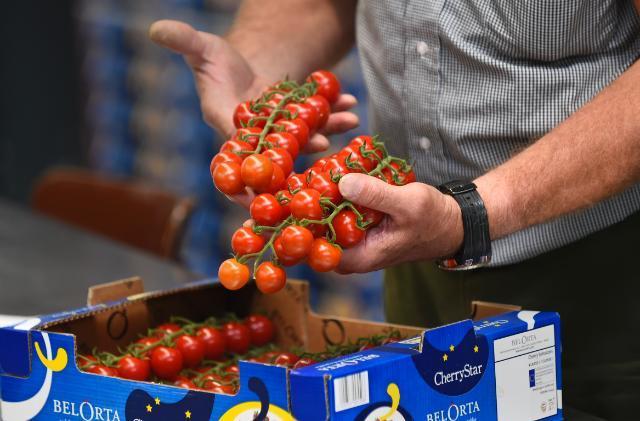внос, домати, Agrozona.bg