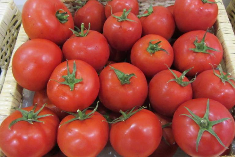 доматен миниращ молец, домати, Agrozona.bg