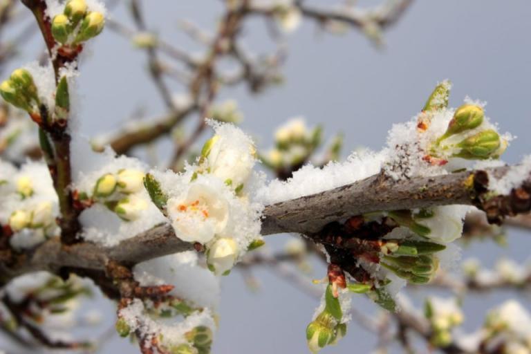 градини, мраз, Agrozona.bg