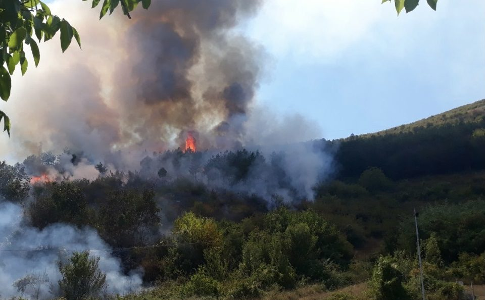пожар, Agrozona.bg