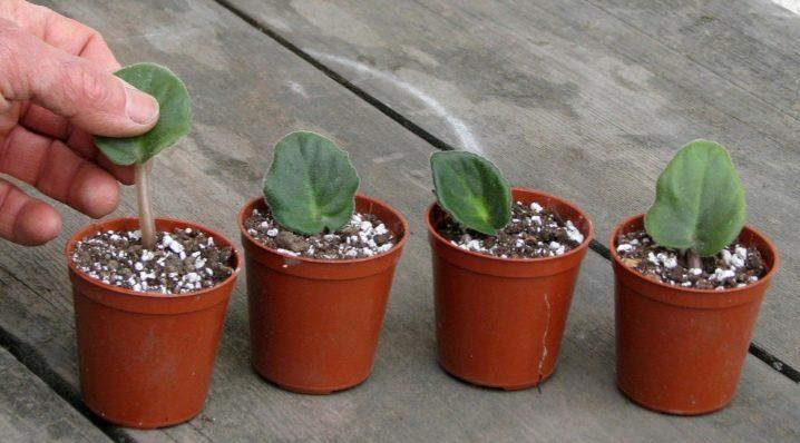 лист, размножаване, Agrozona.bg