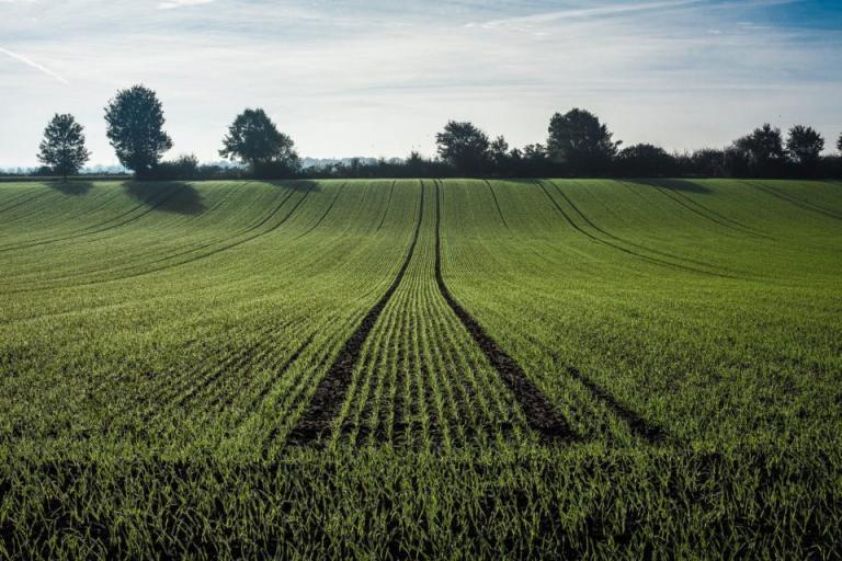 растителнозащитни пръскания, Agrozona.bg