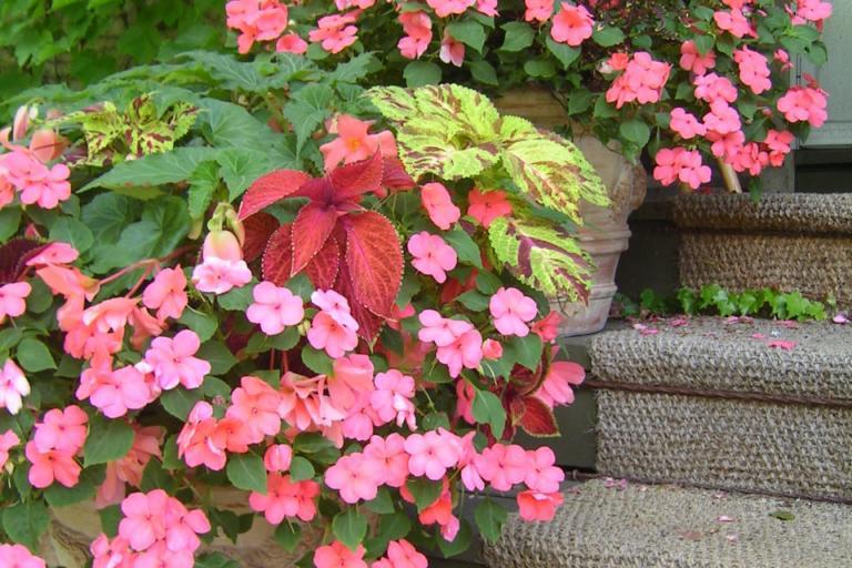 цветя, Agrozona.bg