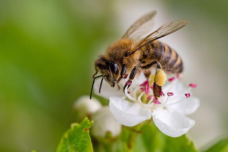 здраве на пчелите, платформа, Agrozona.bg
