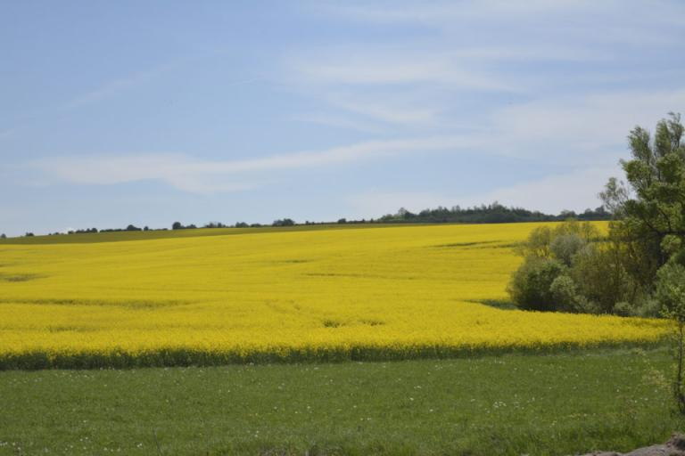 пчелари, рапица, Agrozona.bg